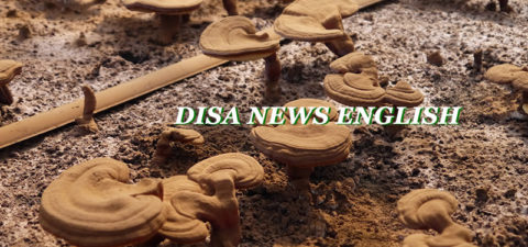 [DISAJP NEWS]  Vol. 16 July 4th, 2019