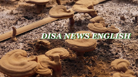 [DISAJP NEWS]  Vol. 16 July 4th, 2019
